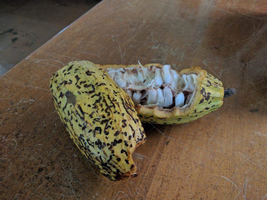 Nicaragua Wawashang Kakaoplante